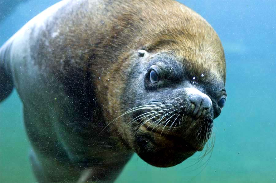 Jylland ordsprog Aalborg Zoo kort